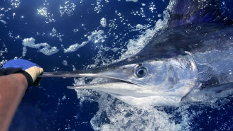 Fish Worth $3.2 Million Wins The 2021 White Marlin Open At The Last Possible Moment