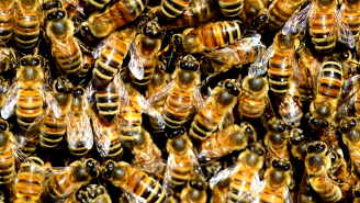 Couple Buys House Only To Discover There Are 450,000 Bees Living In The Walls