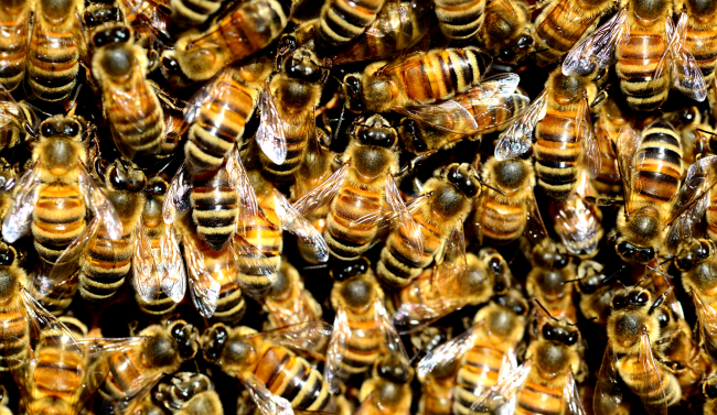 Couple Buys House Only To Discover There Are 450000 Bees Living In The Walls