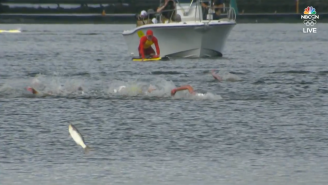 A Flying Fish Was In Gold Medal Contention During The 10K Swim Final At The Olympics But Choked Away The Podium