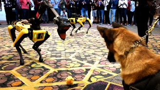 TikTok Video Shows University Of Missouri Students Being Escorted By… Robot Police Dogs?