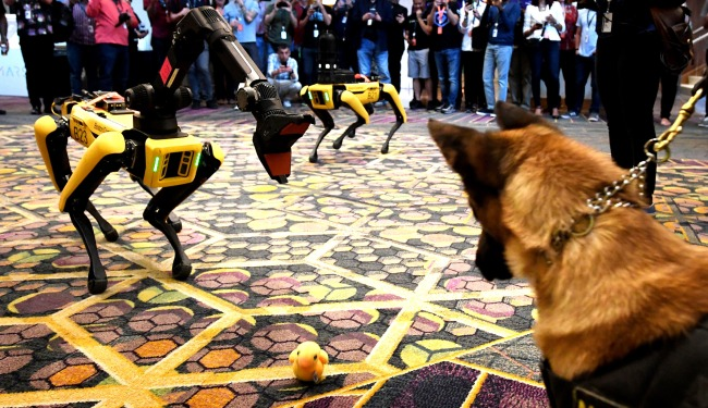 TikTok Video University Of Missouri Students Robot Police Dogs