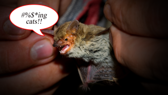 Tiny Thumb-Sized Bat Sets New Record With 1,200 Mile Flight, Then Gets Killed By A House Cat