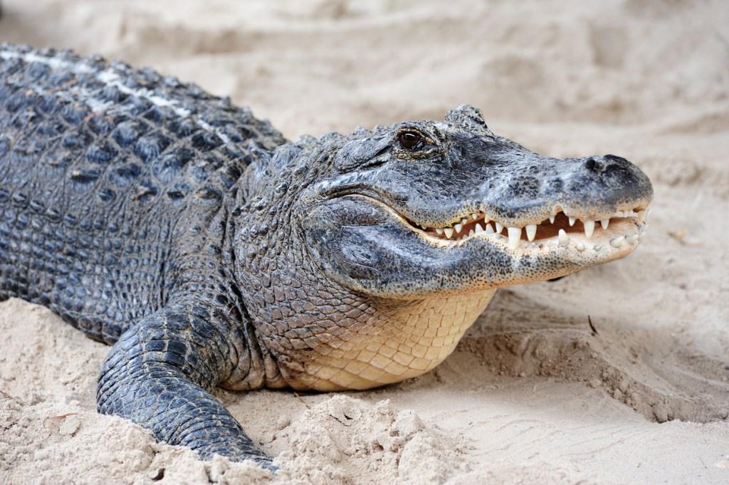 vicious alligator attack utah zoo heroic rescue