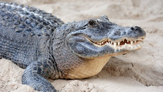 Zoo Employee Brutally Attacked By Alligator During A Kid's Birthday Party Is Saved By A Heroic Guest