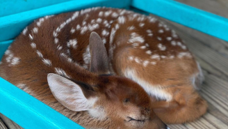 Louisiana Man Saves Baby Deer In Aftermath Of Hurricane Ida, Has The Most Electric Instagram Stories From The Storm