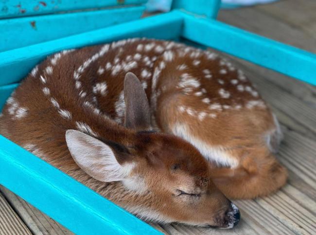 louisiana man saves baby deer hurricane ida