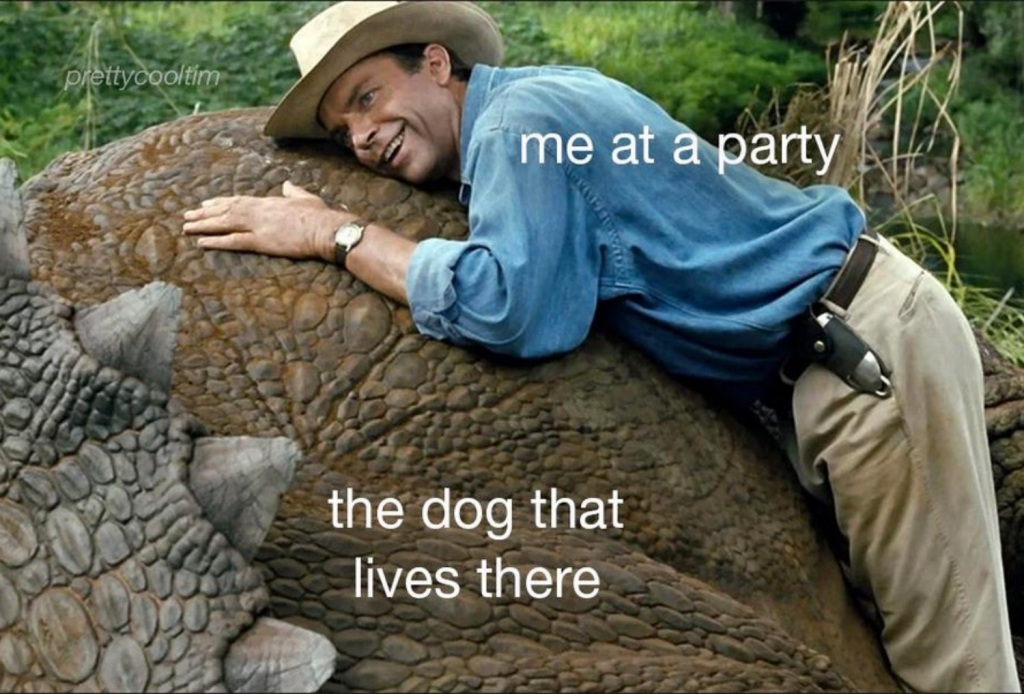 50 best Tuesday memes dogs party