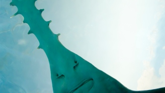 Fishing Captain Fights Rare 12-Foot Sawfish For Two Hours And Proves Dinosaurs Still Exist