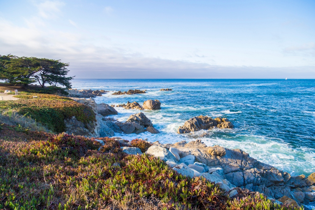 Monterey Bay shapeshifting whalefish spotted