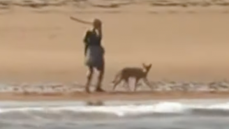 Wild Video Shows Woman Using A Stick To Fend Off A Coyote Who Stalked Her On A Beach In Cape Cod