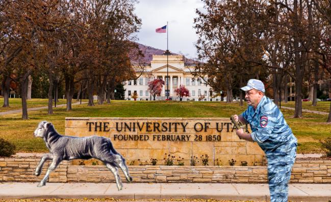 Lamb On The Loose University Of Utah