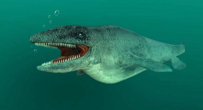 18 Foot Long Prehistoric Sea Monster A Mosasaur Discovered In Kansas