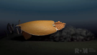 500 Million Year-Old 'Alien-Looking' Sea Creature – A Completely New Species – Discovered In Canada