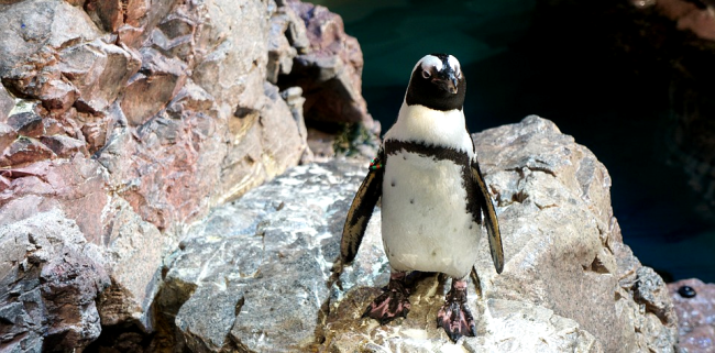 New Discovery Leads Scientists To Believe Penguins Could Be Aliens