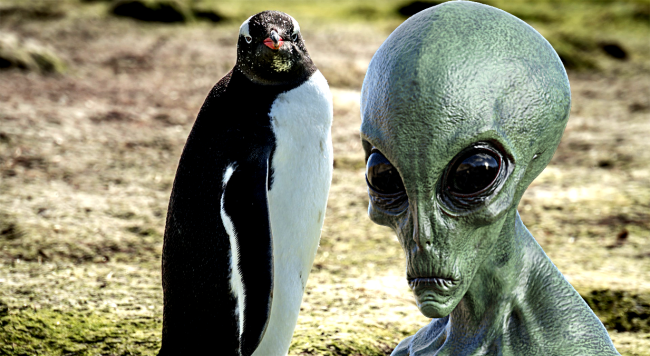 New Discovery Leads Scientists To Believe Penguins Might Actually Be Aliens