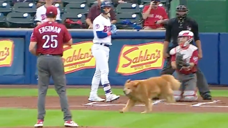 Very Good Bat Dog Interrupts Minor League Baseball Game After Getting A Bit Too Eager To Do His Job