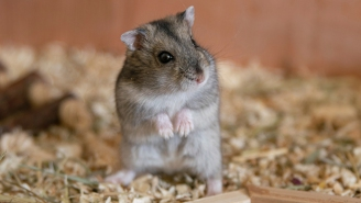Meet The Crypto-Trading Hamster That's Racked Up Some Impressive Returns From An Adorable Office
