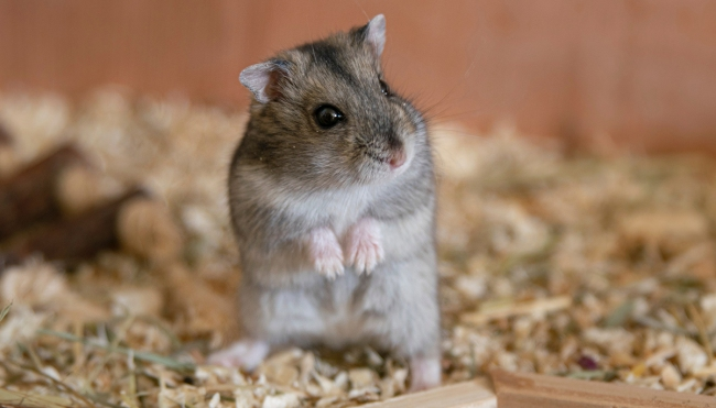 cryptocurrency trading hamster mr goxx