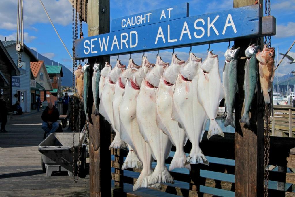 American fishing bucket list Halibut Alaska