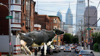 This Philadelphia Cow Who Escaped The Butcher And Ran Loose Through The City Deserves Amnesty