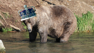 Otis The Bear Continues Dominant Dynasty, Takes Alaska's 'Fat Bear Week' Crown For 4th Time