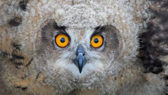 The 'Largest Owl You've Ever Seen' Is On The Loose And Zoo Officials Need Your Help