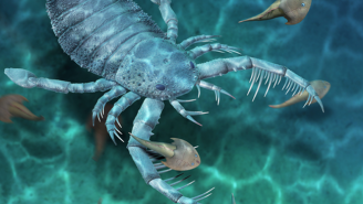 Scientists Discover Fossils Of A Terrifying, Giant 'Sea Scorpion' That Lived 435 Million Years Ago