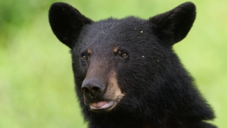 Hunter Recovers Lost GoPro And Discovers A Bear LeftA Wild Video After Finding It First