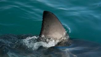 Intense Shark Feeding Frenzy At North Carolina Fishing Pier Left Onlookers Stunned